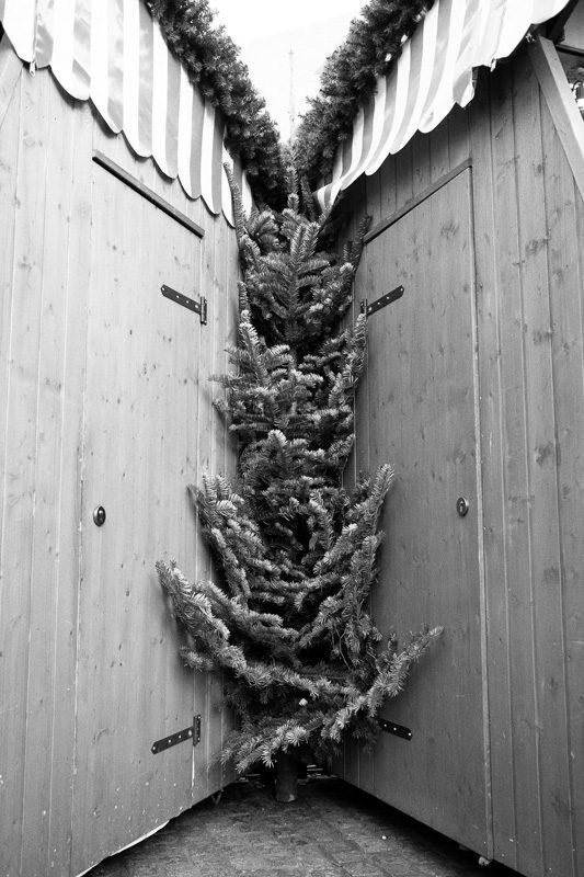 O Tannenbaum | by Marco Ristuccia