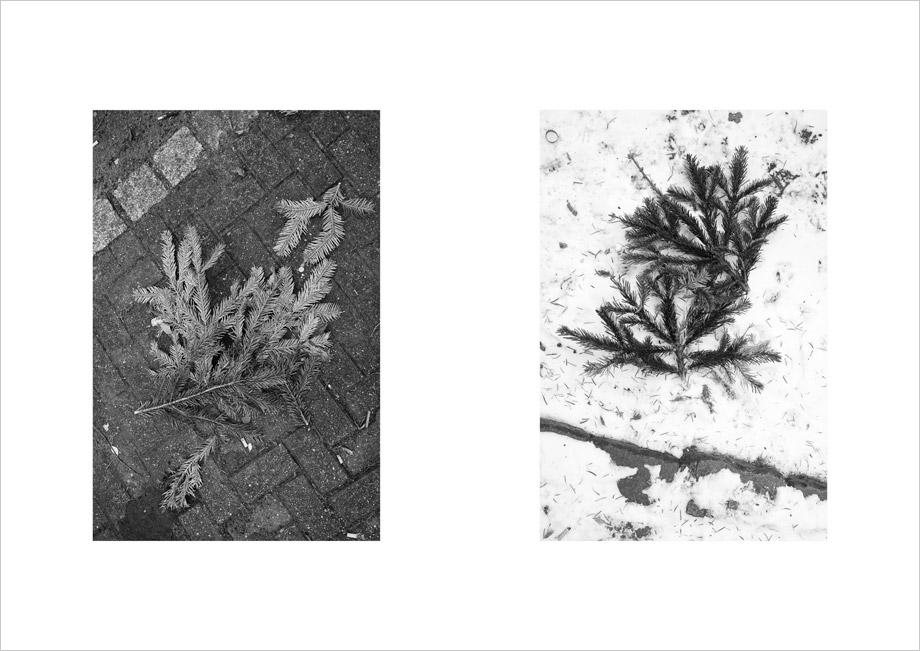 [cml_media_alt id='2350']O Tannenbaum | by Marco Ristuccia[/cml_media_alt]